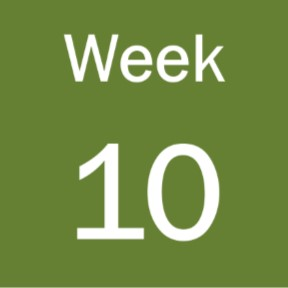 Week 10 of term 3